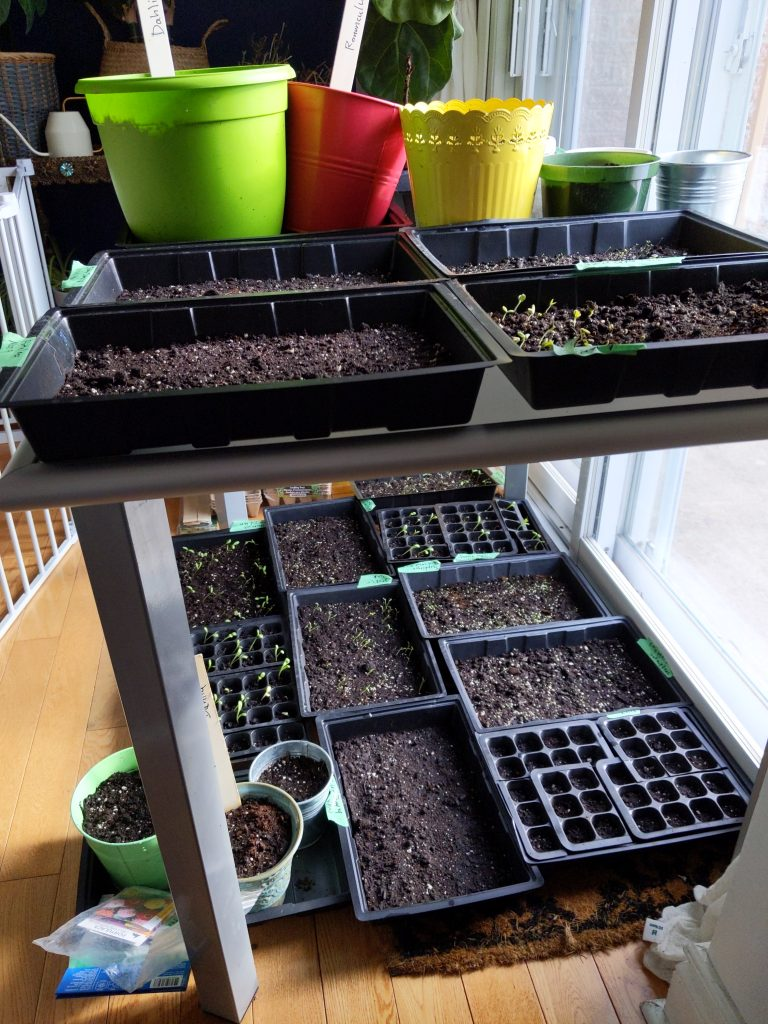 sowing seeds indoors Montreal lifestyle fashion beauty blog 2