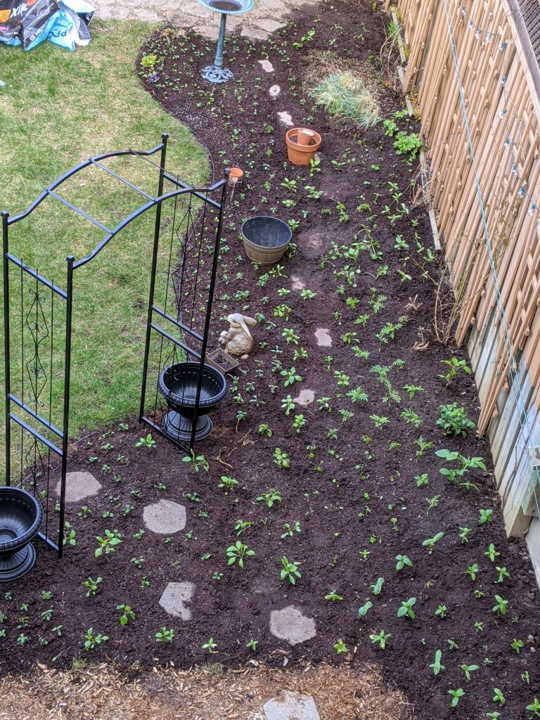transplanting seedlings progress transplanting seedlings backyard border garden transformation remodel Montreal lifestyle fashion beauty blog