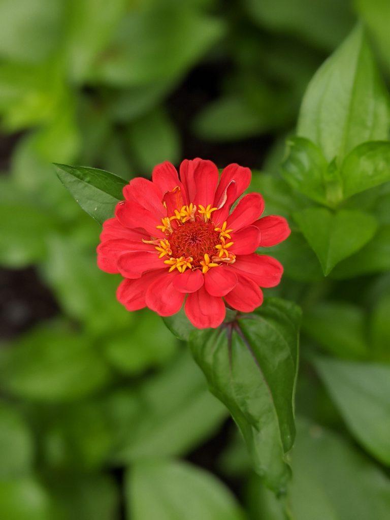 state fair zinnia flower garden Montreal lifestyle fashion beauty blog