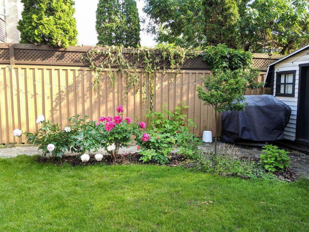 End of June 2019 tree garden