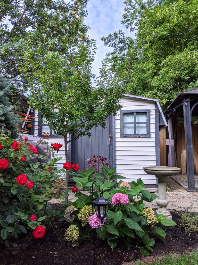new bird bath Malus Coralburst crabapple tree backyard landscaping garden makeover Montreal lifestyle fashion beauty blog