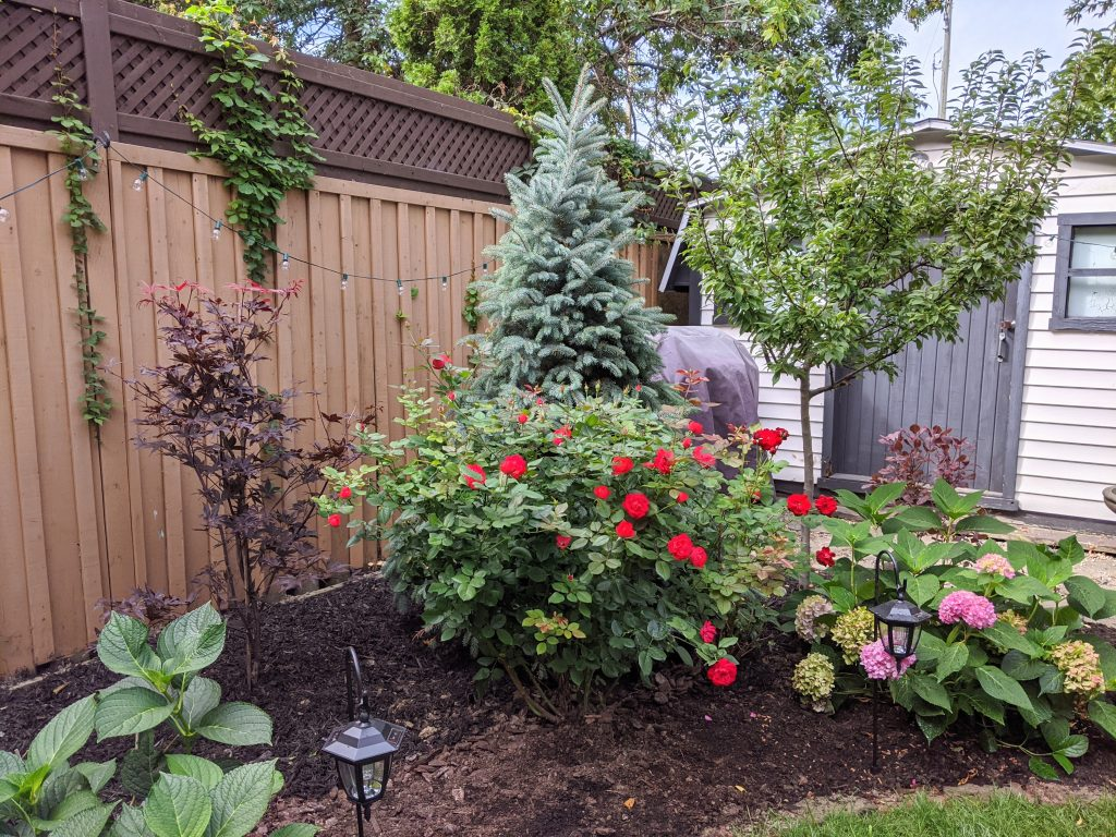 new-trees-backyard-landscaping-garden-makeover-Montreal-lifestyle-fashion-beauty-blog