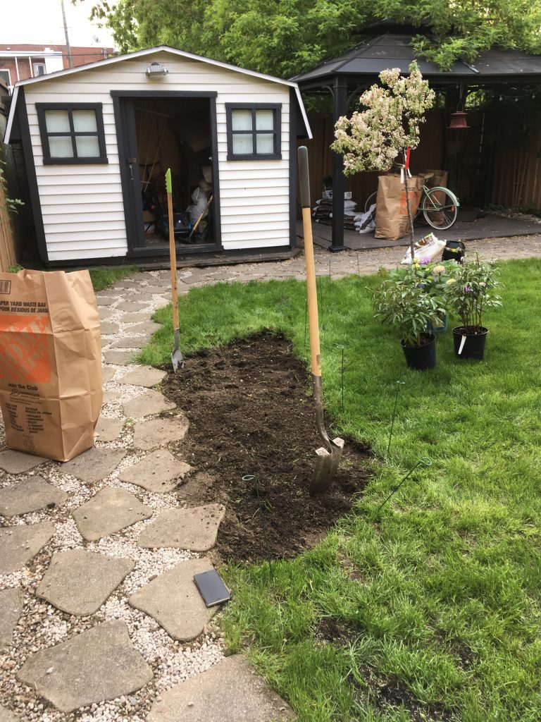 planting crab apple tree Malus Coralburst Montreal lifestyle blogger 2