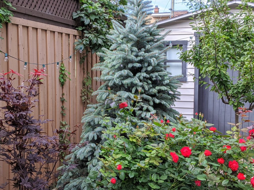 planting new trees backyard landscaping garden makeover Montreal lifestyle fashion beauty blog 1