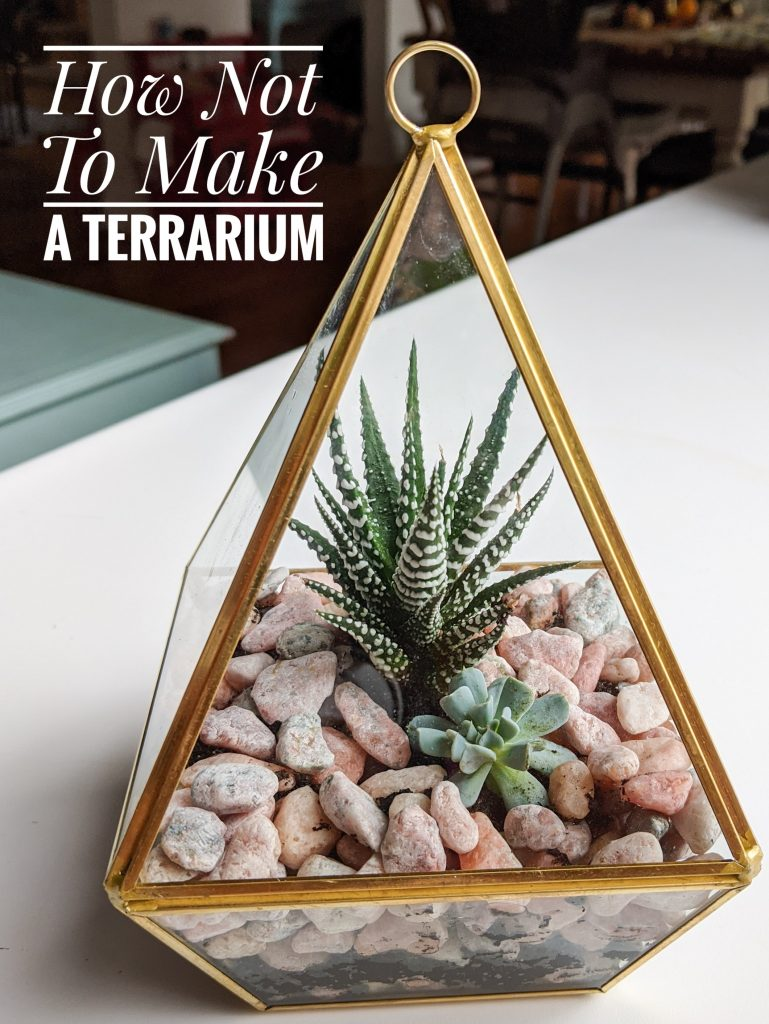 how not to make a terrarium Montreal lifestyle beauty fashion blog