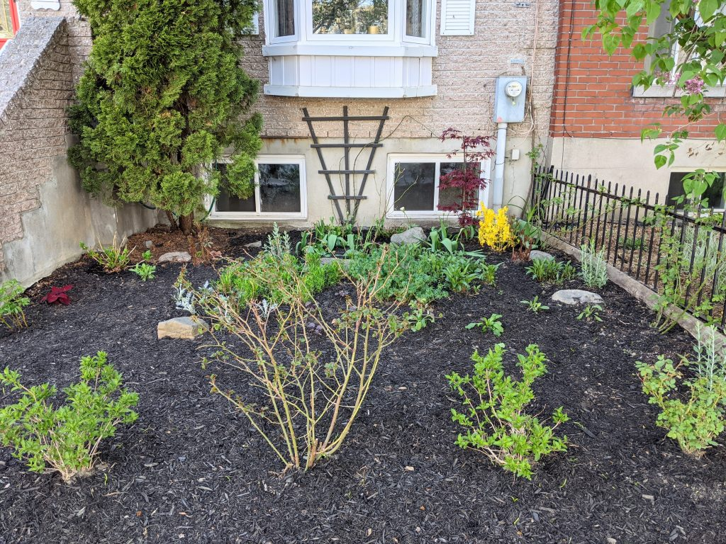 after DIY front yard garden landscaping Montreal lifestyle fashion beauty blog 1