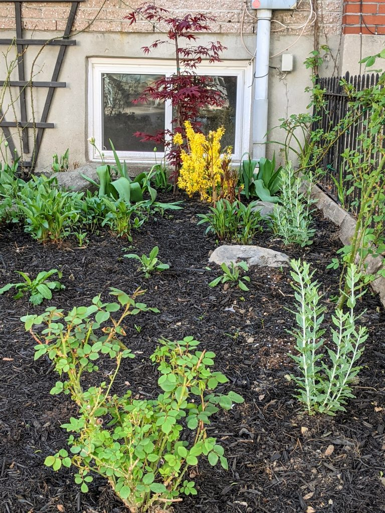 after DIY front yard garden landscaping Montreal lifestyle fashion beauty blog 3