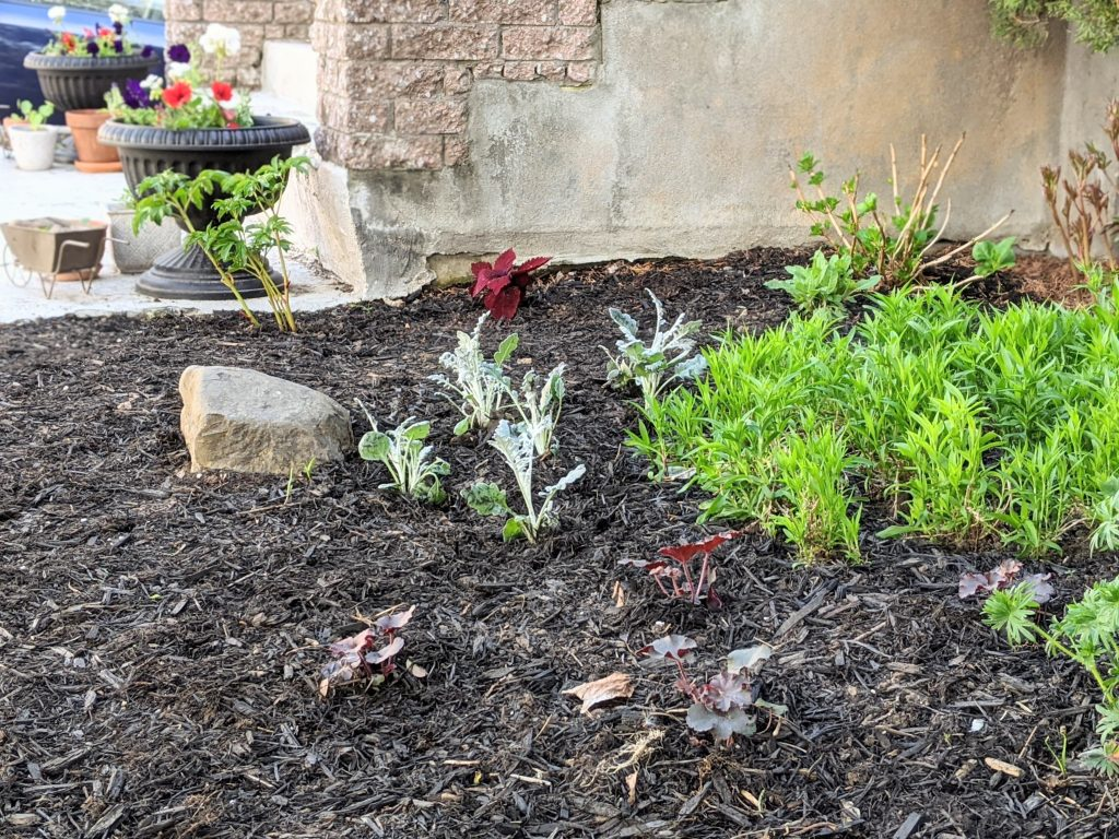 after DIY front yard garden landscaping Montreal lifestyle fashion beauty blog 4