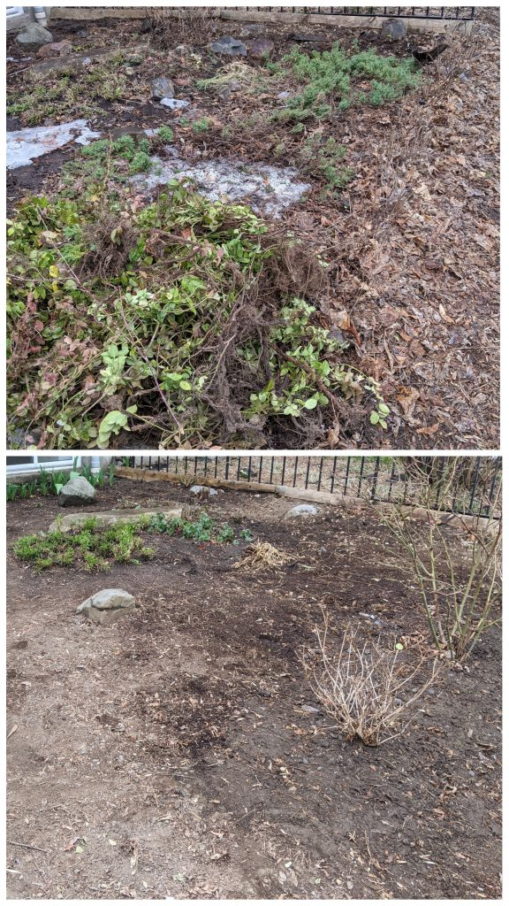 before and after cleanup DIY front yard landscaping makeover Montreal lifestyle fashion beauty blog 2