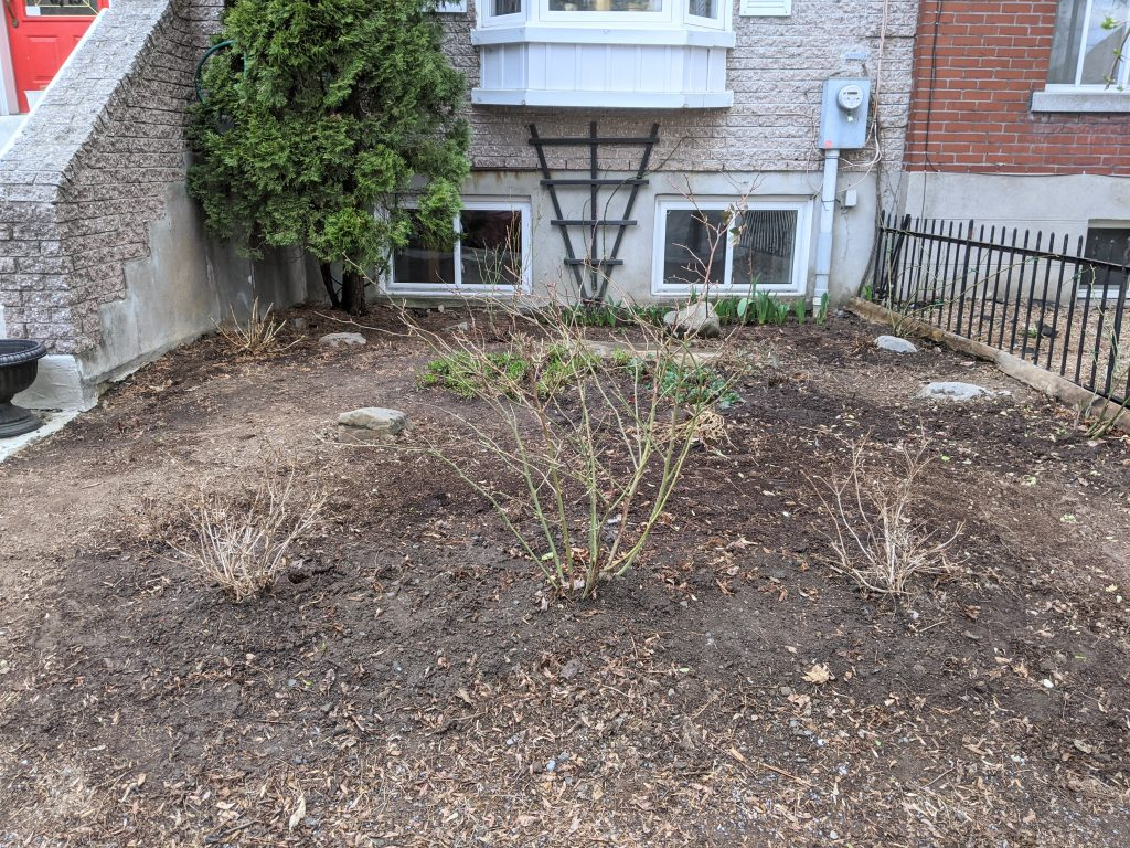 finished transplanting and cleaning bed DIY front yard landscaping makeover Montreal lifestyle fashion beauty blog