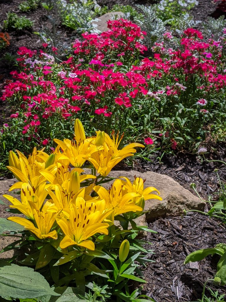 Asiatic Lily DIY front yard landscaping Montreal lifestyle fashion beauty blog
