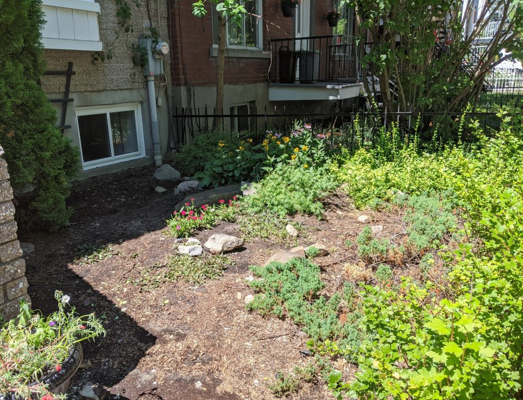 front yard before 2 DIY landscaping gardening Montreal lifestyle fashion beauty blog