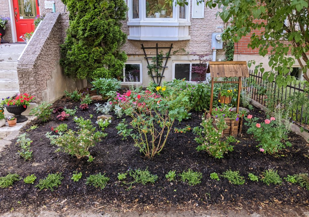 DIY front yard landscaping Montreal lifestyle fashion beauty blog 3