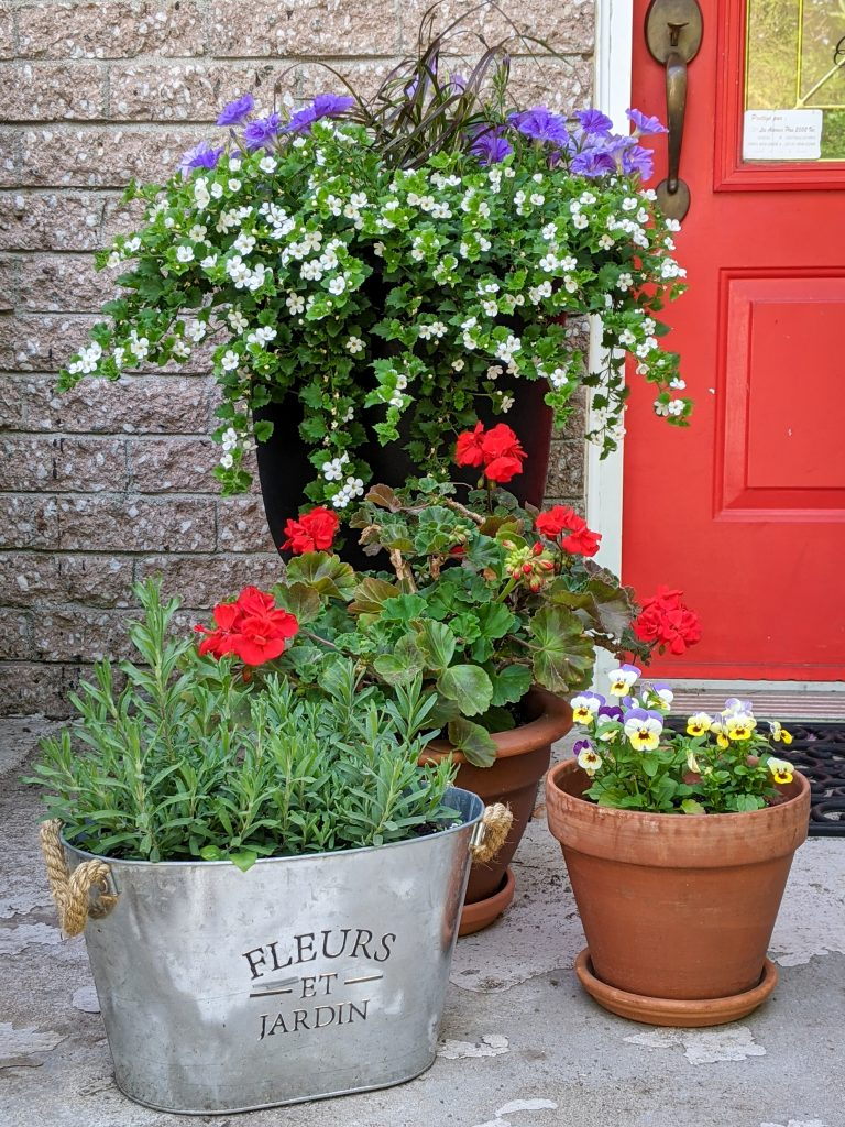 Surfina Sky Blue Petunia bacopa geranium lavender Johnny Jump Up Viola DIY front yard landscaping Montreal lifestyle fashion beauty blog